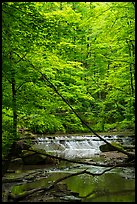 Cascade in forest, Deerlick Creek, Bedford Reservation. Cuyahoga Valley National Park ( color)