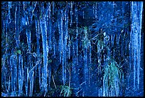 Icicles curtain, Tennessee. Great Smoky Mountains National Park, USA. (color)