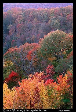 Trees in fall colors over succession of ridges, North Carolina. Great Smoky Mountains National Park, USA.