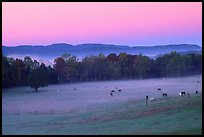 Pasture at dawn with rosy sky, Cades Cove, Tennessee. Great Smoky Mountains National Park, USA.