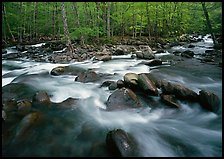 Confluence of the Middle Prong of the Little Pigeon River, Tennessee. Great Smoky Mountains National Park ( color)