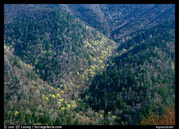 Hillside covered with trees in early spring, North Carolina. Great Smoky Mountains National Park, USA.