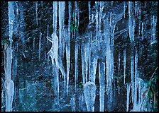 Icicles and rock wall. Great Smoky Mountains National Park ( color)