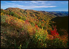 Hillsides covered with trees in autumn color near Newfound Gap, afternoon, North Carolina. Great Smoky Mountains National Park ( color)