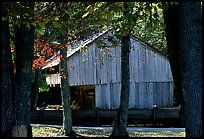 Barn in fall, Cades Cove, Tennessee. Great Smoky Mountains National Park ( color)