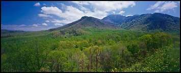 Appalachian hills covered with green trees in the spring. Great Smoky Mountains National Park (Panoramic color)