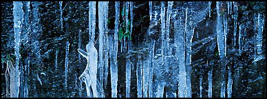 Close-up of icicle formation in winter. Great Smoky Mountains National Park (Panoramic color)