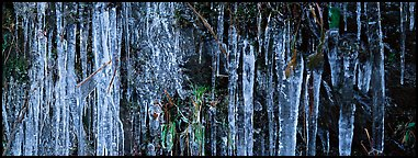 Rock with icile tapestry. Great Smoky Mountains National Park (Panoramic color)