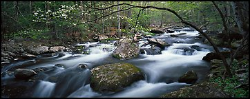 Cascading stream in Appalachian spring forest. Great Smoky Mountains National Park (Panoramic color)