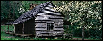 Wooden Appalachian mountain cabin and dogwood tree in bloom. Great Smoky Mountains National Park (Panoramic color)
