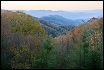 View over mountains in fall colors at dawn, North Carolina. Great Smoky Mountains National Park ( color)