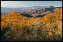 Mountains in autumn foliage, early morning, North Carolina. Great Smoky Mountains National Park ( color)