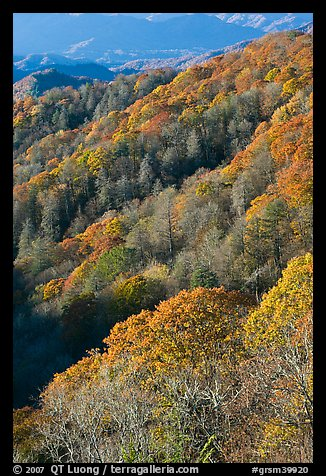 Slopes with forest in fall foliage, North Carolina. Great Smoky Mountains National Park, USA.