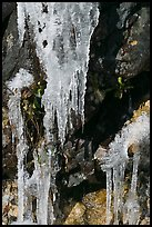 Icicles and rock, overnight frost, North Carolina. Great Smoky Mountains National Park ( color)