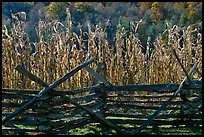 Fence and corn, Oconaluftee Mountain Farm, North Carolina. Great Smoky Mountains National Park, USA.