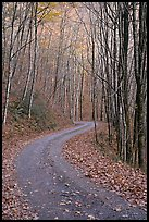 Unpaved Balsam Mountain Road in autumn forest, North Carolina. Great Smoky Mountains National Park ( color)