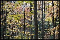 Forest scene in autumn, Tennessee. Great Smoky Mountains National Park, USA.
