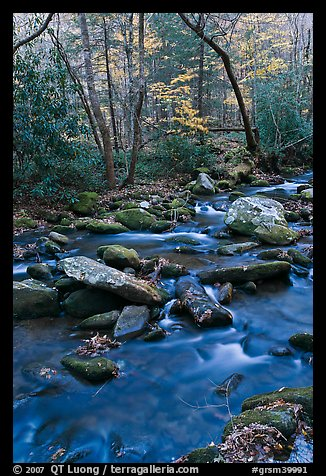 Stream in autumn, Roaring Fork, Tennessee. Great Smoky Mountains National Park, USA.