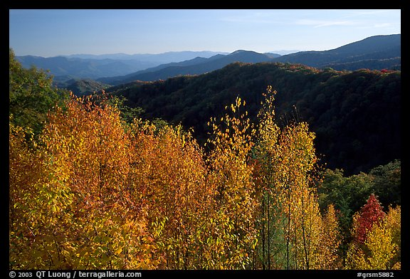 Trees in fall colors and backlit hillside near Newfound Gap, Tennessee. Great Smoky Mountains National Park, USA.