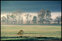 Meadow, trees, and fog, early morning, Cades Cove, Tennessee. Great Smoky Mountains National Park, USA.