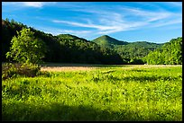 Meadow, Cataloochee Valley, North Carolina. Great Smoky Mountains National Park ( color)