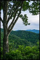 View from Cataloochee Overlook, North Carolina. Great Smoky Mountains National Park ( color)