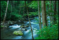 Little River, Elkmont, Tennessee. Great Smoky Mountains National Park ( color)