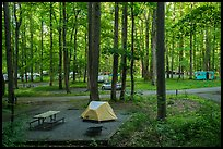Elkmont Campground, Tennessee. Great Smoky Mountains National Park ( color)