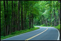 Newfound Gap Road, Tennessee. Great Smoky Mountains National Park ( color)