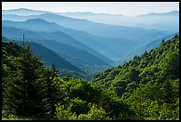 Oconaluftee Valley, early morning, North Carolina. Great Smoky Mountains National Park ( color)