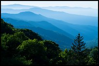 Receding valley and stacked ridges, early morning, North Carolina. Great Smoky Mountains National Park ( color)
