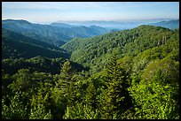 View from Deep Creek Overlook in summer, North Carolina. Great Smoky Mountains National Park ( color)