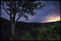 Star trails from Cataloochee Overlook, North Carolina. Great Smoky Mountains National Park ( color)