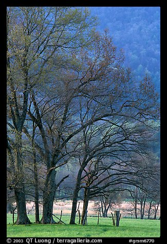 Meadow with trees in early spring, Cades Cove, Tennessee. Great Smoky Mountains National Park, USA.