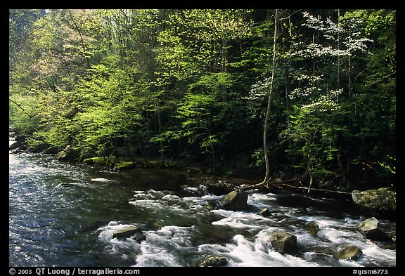 Sunlit Little River in the spring, early morning, Tennessee. Great Smoky Mountains National Park, USA.