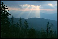 Silhouetted trees and God's rays from Clingmans Dome, early morning, North Carolina. Great Smoky Mountains National Park ( color)