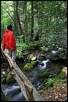 Hiker on tiny footbrige above stream, Tennessee. Great Smoky Mountains National Park, USA.