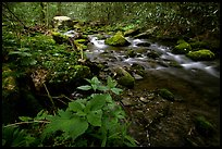 Cosby Creek, Tennessee. Great Smoky Mountains National Park ( color)