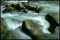 Rocks in river, Greenbrier, Tennessee. Great Smoky Mountains National Park ( color)
