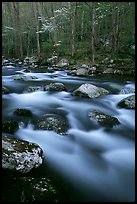Boulders in flowing water, Middle Prong of the Little River, Tennessee. Great Smoky Mountains National Park, USA. (color)