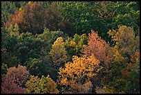 Trees in fall color on hillside. Hot Springs National Park ( color)