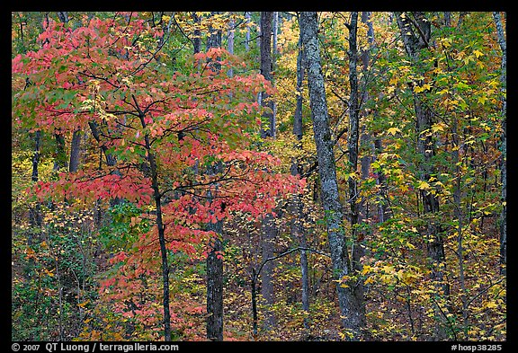 Trees in fall colors, West Mountain. Hot Springs National Park, Arkansas, USA.