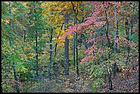 Forest in fall colors, West Mountain. Hot Springs National Park ( color)
