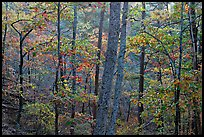 Forest in autumn colors, West Mountain. Hot Springs National Park ( color)