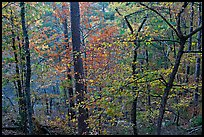 Deciduous trees in fall colors, West Mountain. Hot Springs National Park ( color)