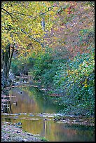 Stream and trees in fall colors, Gulpha Gorge. Hot Springs National Park ( color)