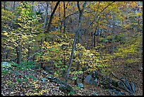 Trees in fall foliage, Gulpha Gorge. Hot Springs National Park ( color)
