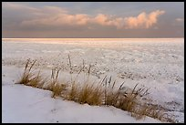 Dune grass, snow, and Frozen Lake Michigan, Mount Baldy Trail. Indiana Dunes National Park ( color)