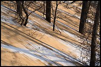 Shadows and tree trunks, Mount Baldy. Indiana Dunes National Park ( color)