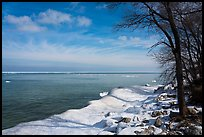 Trees on snowy lakeshore, Lake View. Indiana Dunes National Park ( color)
